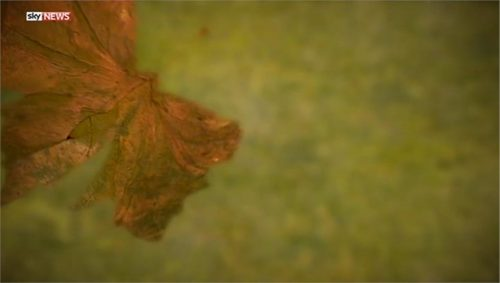 Sky News Promo 2014 - The Autumn Statement 11-29 18-59-24